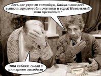 Животные Кировлеса.JPG